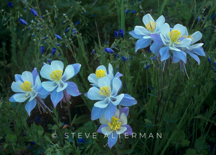 104 Columbine Cluster, Ouray, Colorado