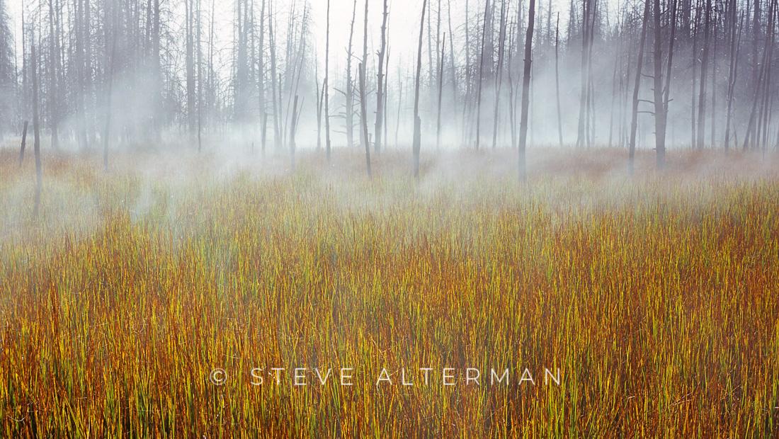 116 Morning Fog, Yellowstone National Park