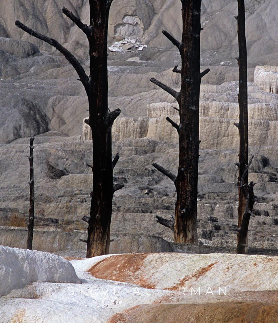 117 Mammoth Hot Springs, Yellowstone National Park