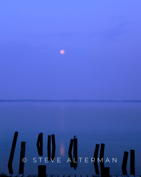 208 Blue Moonset, Duck