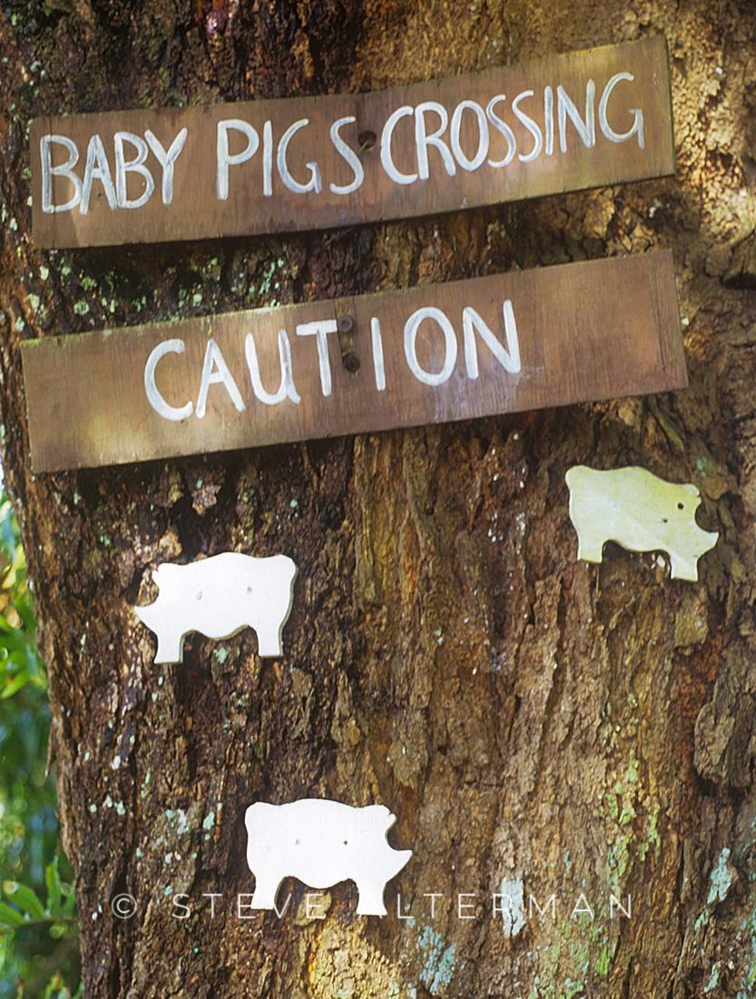 302 Baby Pigs Crossing, Hana Highway, Maui