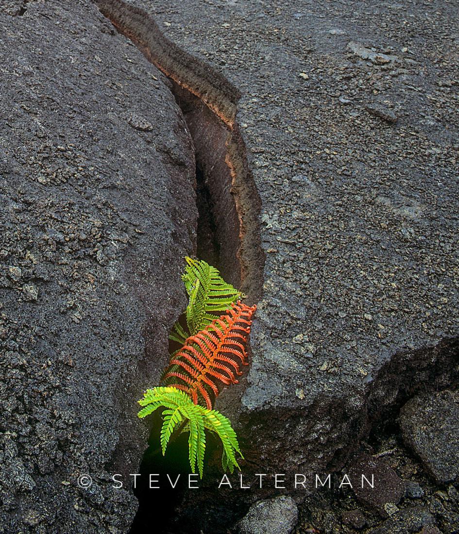 308 Kilauea Iki Ferns, Hawaii Island
