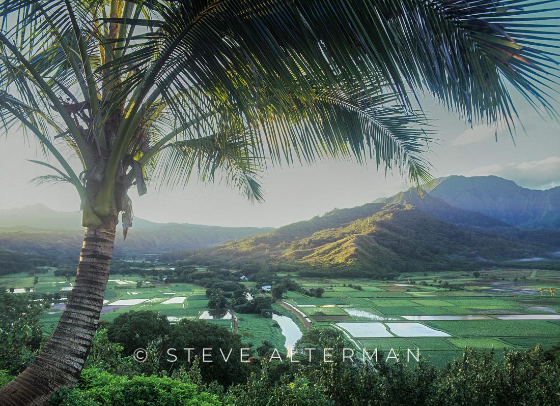 316 Hanalei Taro Field Overlook, Kauai