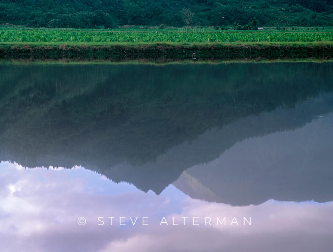 318 Hanalei Taro Field reflection, Kauai