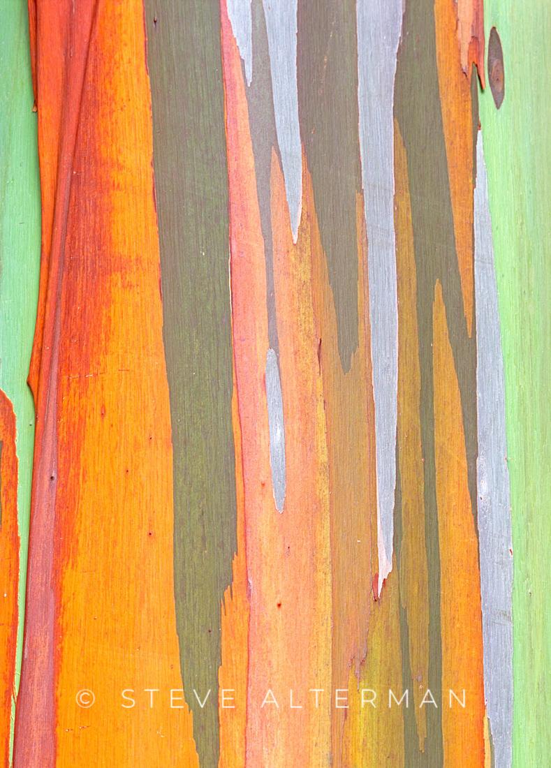 320 Rainbow Eucalyptus Bark, Princeville, Kauai