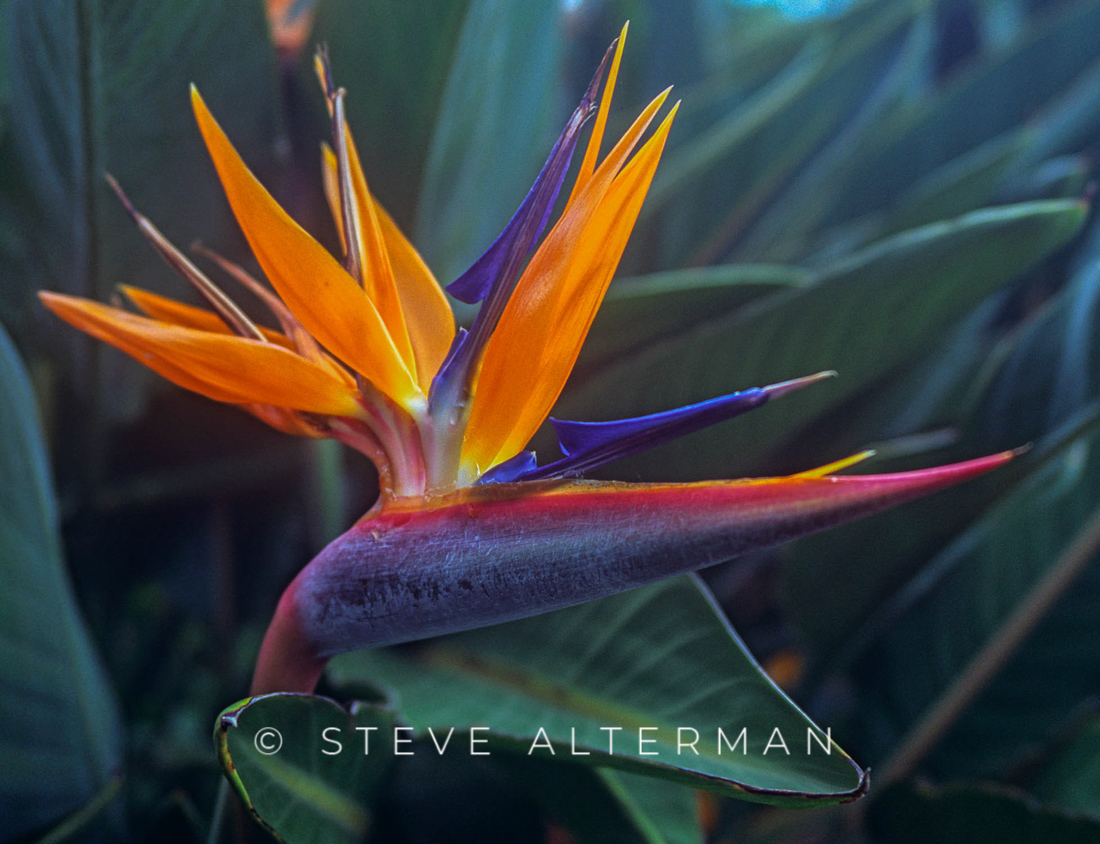 321 Bird of Paradise, North Shore, Kauai