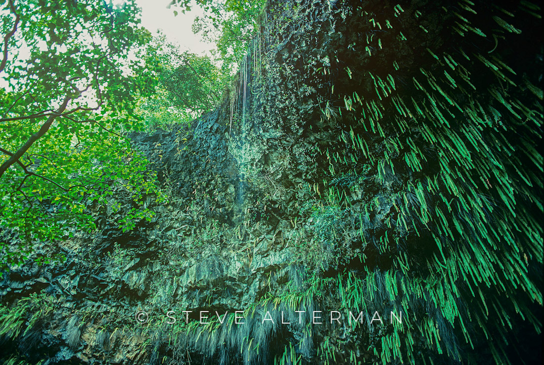323 Fern Grotto, East Side, Kauai
