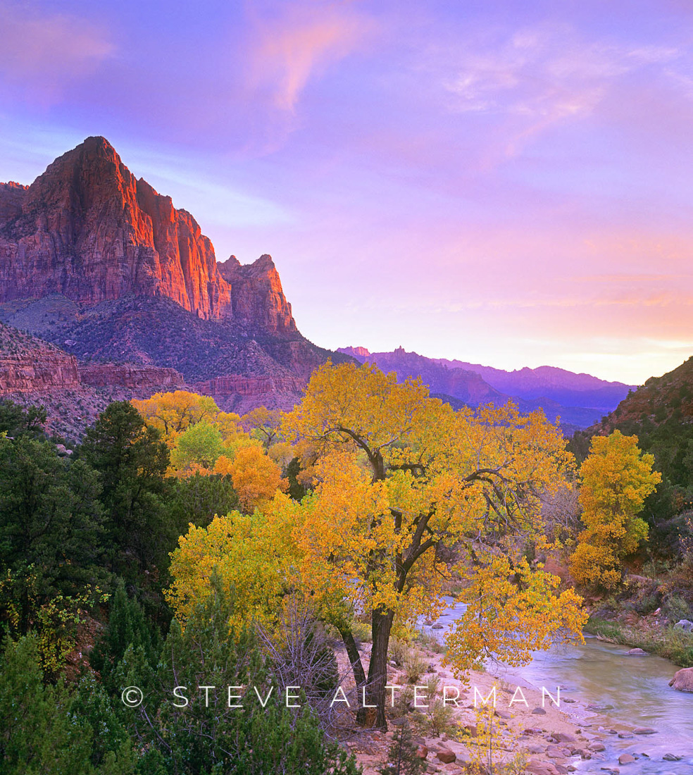 520 The Watchman in Autumn, Zion National Park