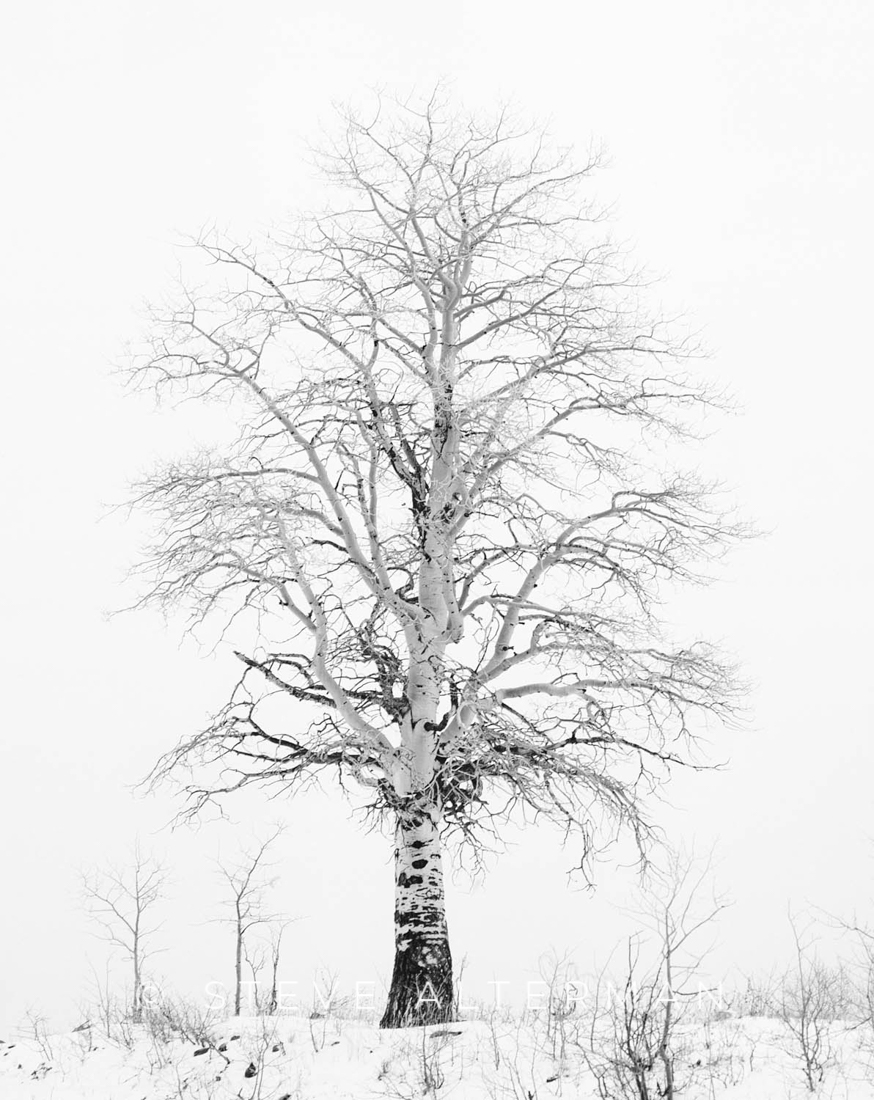 530 Lone Aspen, Boulder Mountain, Dixie National Forest
