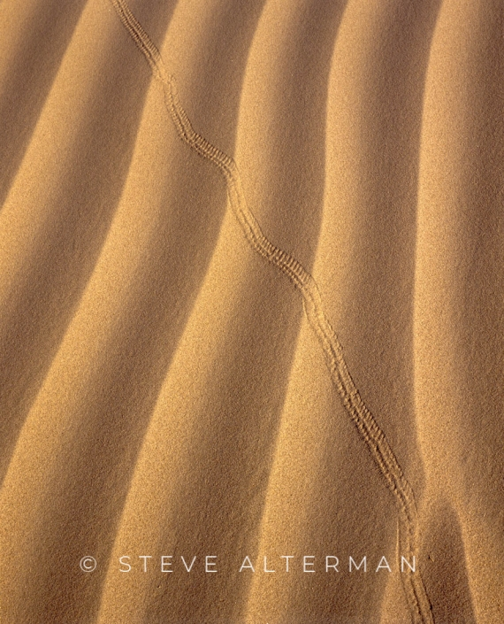 604 Beetle Tracks, Mesquite Flats Dunes, Death Valley National Park