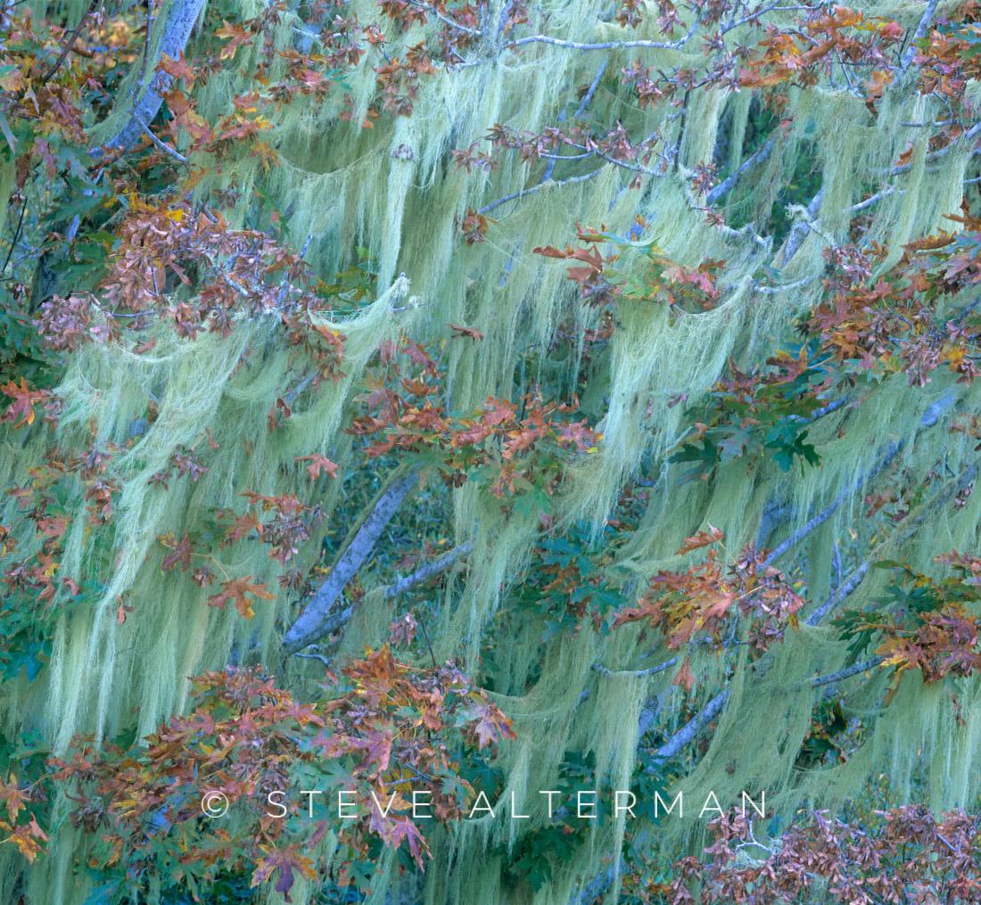 616 Autumn Moss, Duncans Mills