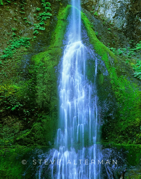 709 Marymere Falls, Olympic National Park