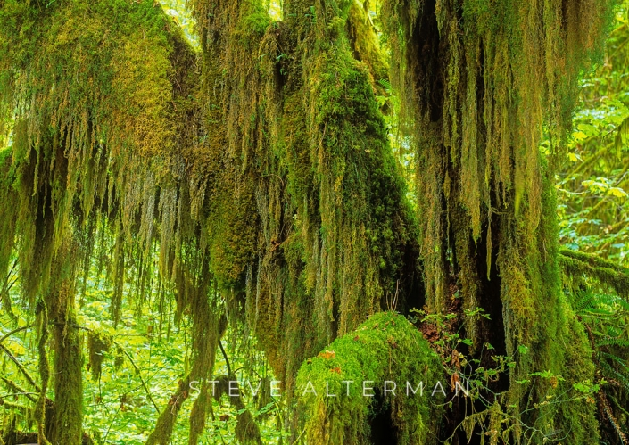 717 Hoh Rain Forest, Olympic National Park