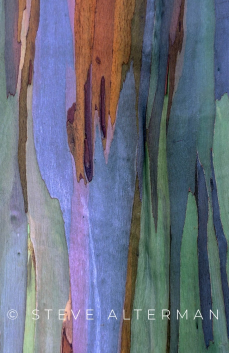 811 Rainbow Eucalyptus, North Shore, Kauai