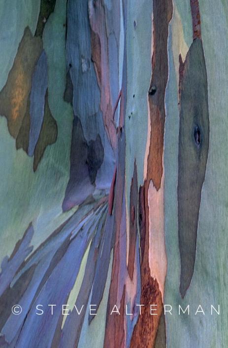 812 Rainbow Eucalyptus, North Shore, Kauai