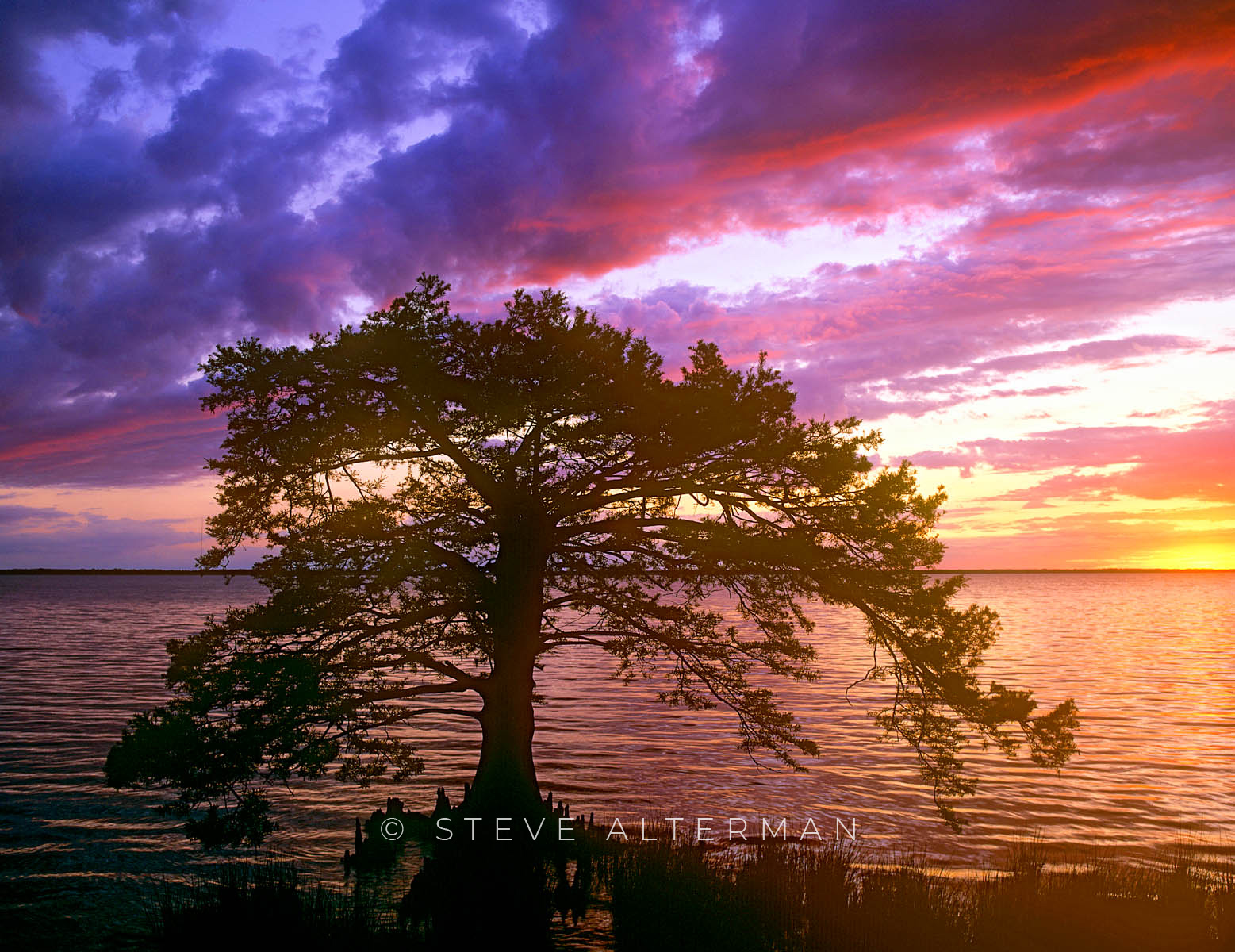 817 Soundside Cypress at Sunset - Duck, North Carolina