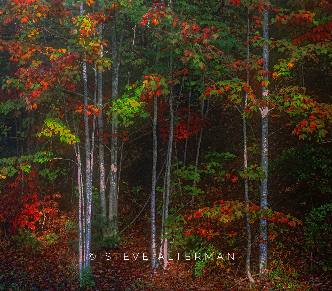 833 Autumn, Foothills Parkway - Great Smoky Mountains NP